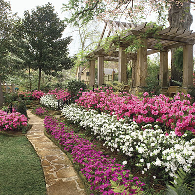 Landscape Planning - Azaleas help Create A Beautiful Landscape