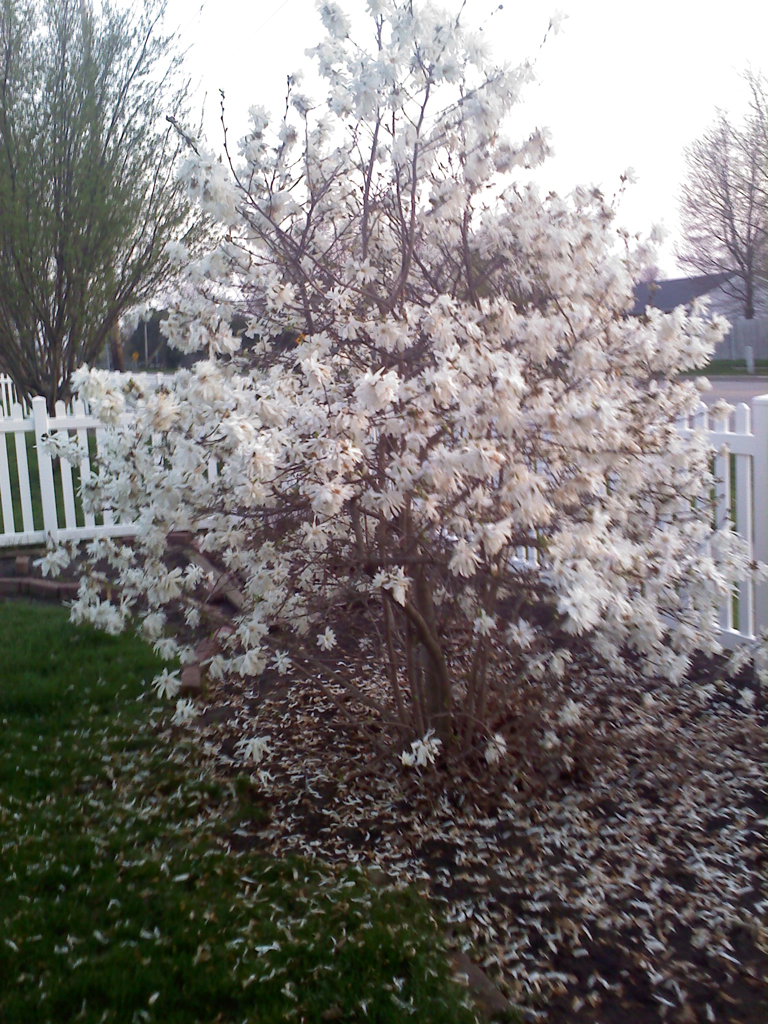 Landscape Planning When To Prune Flowering Shrubs