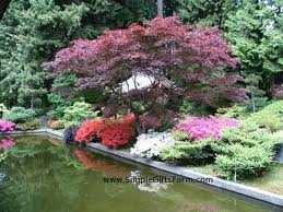 An example of a Japanese garden